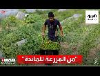 شاهدبدون وسيط مبادرة لدعم المزارعين في فلسطين