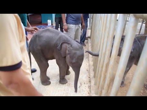 مصر اليوم - شاهد الفيل الصغير يثير ذعر سكان القرى في الهند