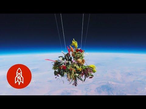 مصر اليوم - شاهد اليابان ترسل باقة زهور إلى الفضاء الخارجي