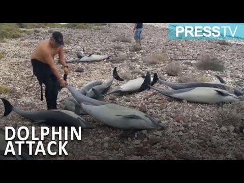 شاهد وفاة 21 دولفين بالقرب من شاطئ في شمال المكسيك
