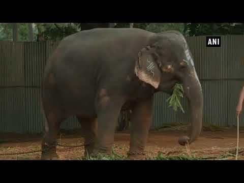 شاهد الفيل الفنان يعزف على آلة الهارمونيكا لجذب الزوار