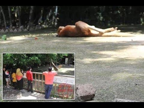 شاهد زوّار حديقة حيوان يقتلون كنغر رميًا بالطوب