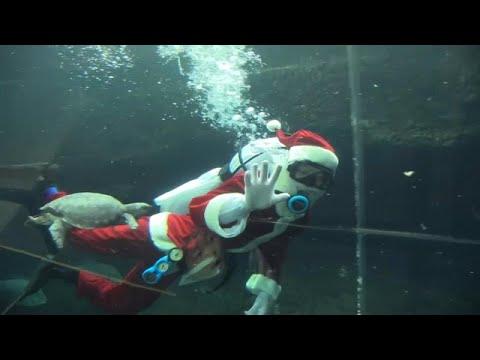 شاهد سانتا كلوز يجذب انتباه زوار حوض أسماك في اليابان