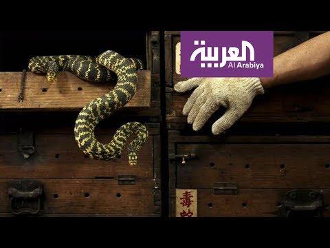 شاهد أبحاث علمية تتوصل لعلاج لدغات الثعابين السامة