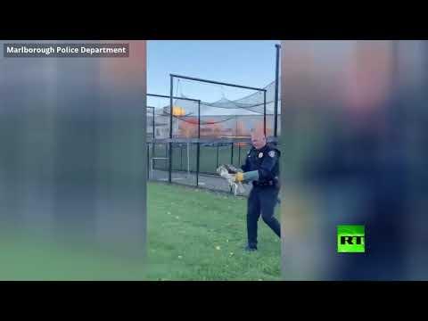 شاهد شرطي ينقذ صقرًا كبيرًا عالقًا في شباك مرمى في مارلبورو
