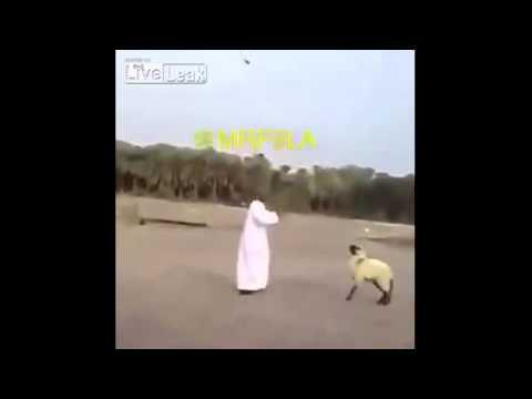 أطرف دويتو راقص بين سوداني وخروفه