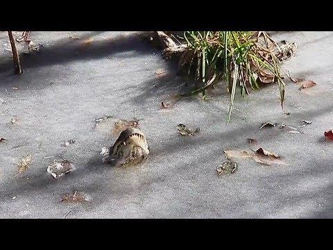 how did alligators survive