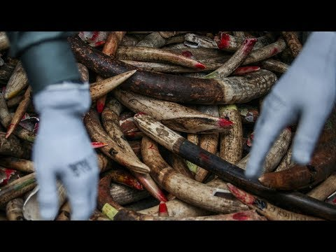 africa's fight against elephant poaching