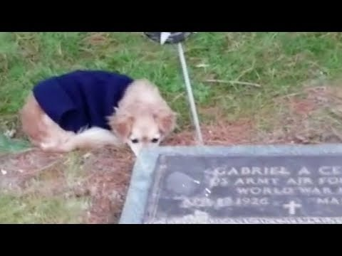 loyal dog refuses to leave owners grave