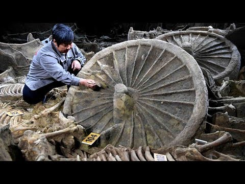 2400yearold horse chariot pit excavated