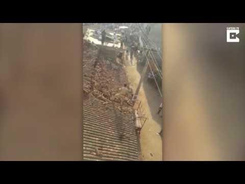 مصر اليوم - هجوم نمر يجبر عامل إنقاذ على القفز من فوق سطح منزل