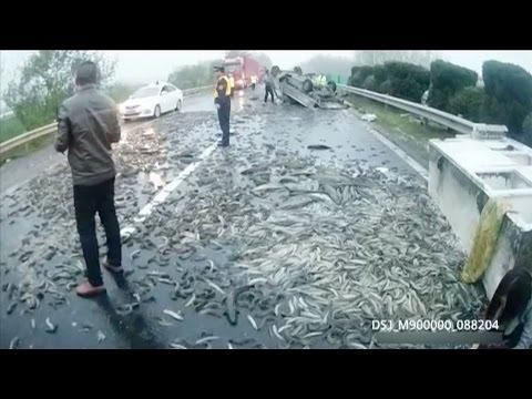 مصر اليوم - بالفيديو طن ونصف من الأسماك الحية على الأسفلت في الصين