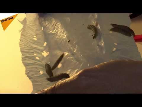 مصر اليوم - بالفيديو ديدان قادرة على التهام المواد البلاستيكية