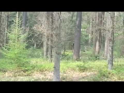 مصر اليوم - بالفيديو  مخلوق غامض يراقب مجموعة شباب داخل غابة