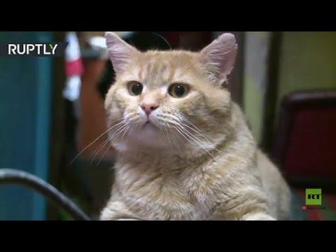 مصر اليوم - سان بطرسبورغ تحتفل بعيد قطط متحف الأرميتاج