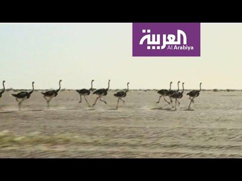 مصر اليوم - شاهد تساؤلات بشأن حماية البيئة السعودية