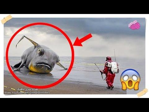 مصر اليوم - شاهد 10 مخلوقات بحريه غريبة تم اكتشافها بعد حدوث تسونامي