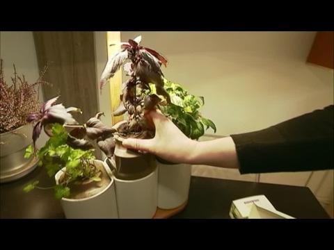 مصر اليوم - شاهد  زراعة الأعشاب العطرية أصبح أمرًا ممكنًا داخل المنازل