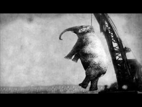 مصر اليوم - شاهد إعدام الفيلة ماري شنقًا
