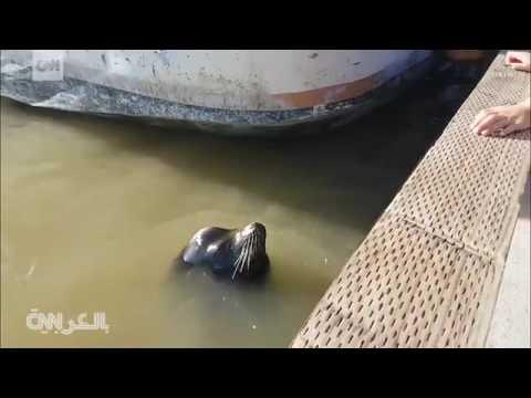 مصر اليوم - شاهد أسد بحر يخطف فتاة وسط أسرتها