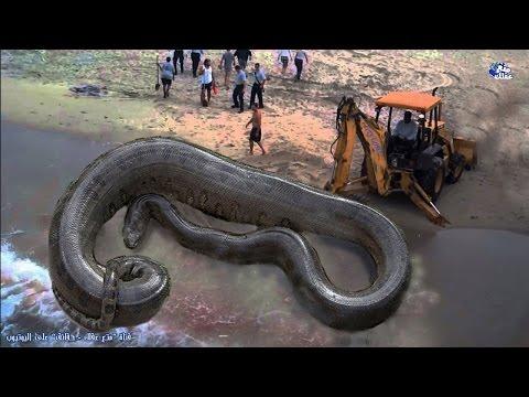 مصر اليوم - بالفيديو  حقائق رهيبة ومخيفة عن الثعابين