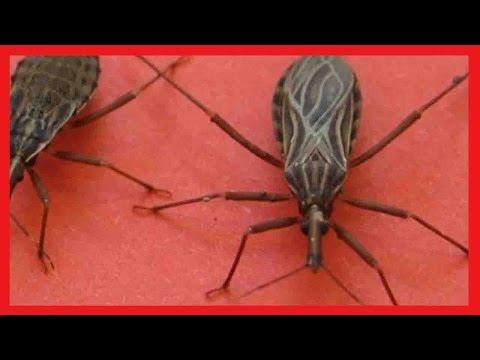 مصر اليوم - شاهد حشرة إذا وجدتها في منزلك عليك الاتصال بالإسعاف