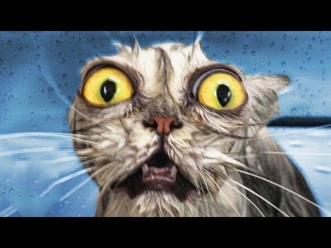 مصر اليوم - لماذا تكره القطط المياه