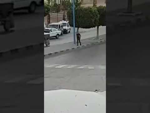مصر اليوم - شاهد لص يسرق سائقًا من داخل سيارته بطريقة صادمة