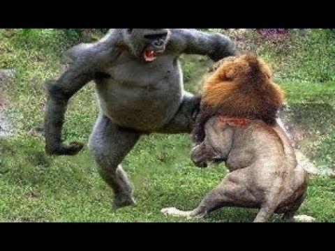 مصر اليوم - شاهد لحظات لا تُنسى لأقوى 10 حيوانات على الأرض