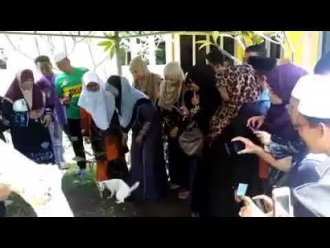 مصر اليوم - شاهد قط يشارك في جنازة رجل