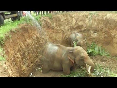 مصر اليوم - شاهد إنقاذ 4 أفيال صغيرة سقطت في حفرة