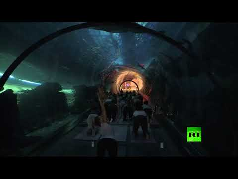 مصر اليوم - شاهد يوغا تحت الماء في دبي مول تثير الإعجاب والدهشة