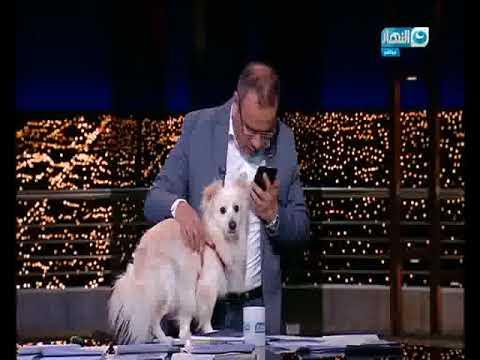 مصر اليوم - شاهد جابر القرموطي يتحدى الأزهر والإفتاء بظهوره بكلب على الهواء