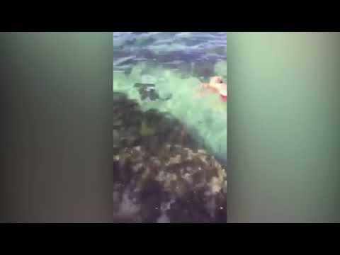 مصر اليوم - شاهد مصارعة شرسة بين سمكة قرش وسيدة في حمام سباحة