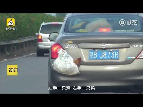 مصر اليوم - شاهد سائق ينقل بطة ودجاجة بطريقة غريبة
