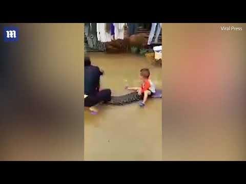 مصر اليوم - شاهد طفل يمتطي ثعبانًا ضخمًا كالحصان