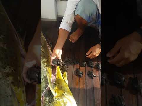 مصر اليوم - شاهد رجل يفتح بطن سمكة ويعثر على مفاجأة غير متوقعة بداخلها