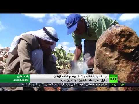 مصر اليوم - شاهد زيت البدودية تقليد مرتبط بقطاف الزيتون