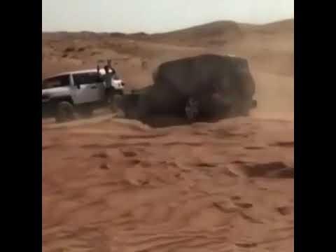 مصر اليوم - رجل يستعرض مهاراته في القيادة بطريقة مذهلة
