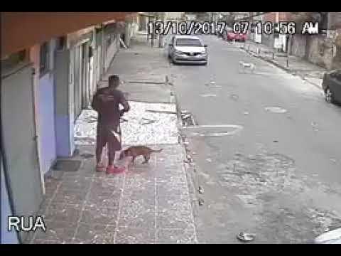 مصر اليوم - رد فعل رجل قضى كلب حاجته عليه