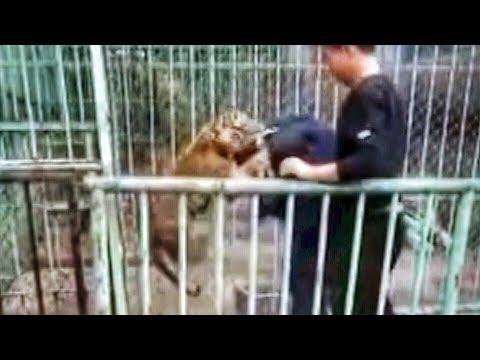 مصر اليوم - شاهد نمر صغير يهرب من حديقة حيوان