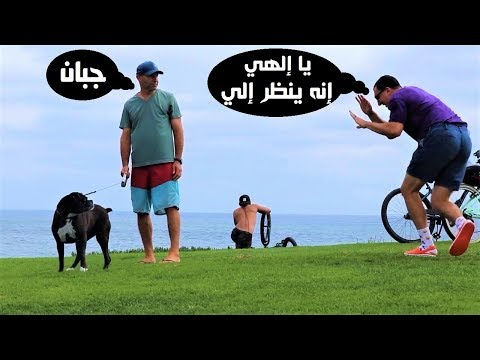 مصر اليوم - شاهد شاهد رد فعل الفتيات علي مقلب الكلب المسكين