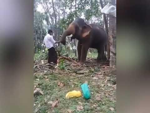 شاهد فيل ضخم ينتقم من رجل حاول تقبيله