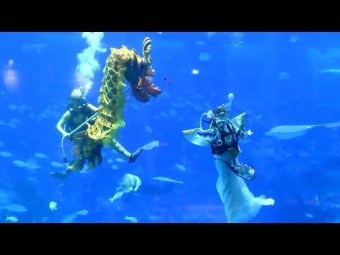شاهد عرض راقص تحت الماء احتفالًا برأس السنة القمرية