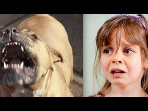 شاهد كلب يرافق طفلة طيلة 5 أعوام
