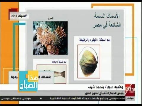 شاهد قائمة الأسماك السامّة المحظور تداولها في مصر