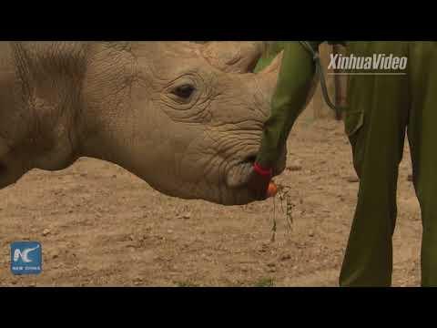 فيديو معاناة ذكر وحيد القرن النادر