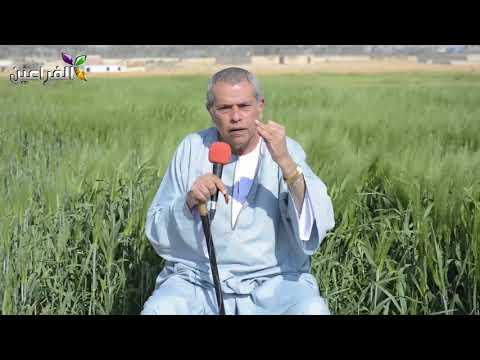 بالفيديو الإعلامي توفيق عكاشة يطالب المصريين بانتخاب الرئيس السيسي