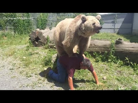 الدب السوري يجد سعادته على ظهر رجل أميركي