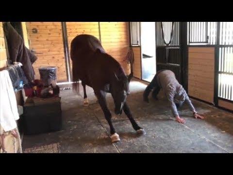 شاهد حصان يمارس اليوغا مع صاحبته